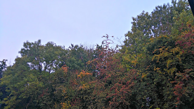 trees in autumn with the leaves changing colour