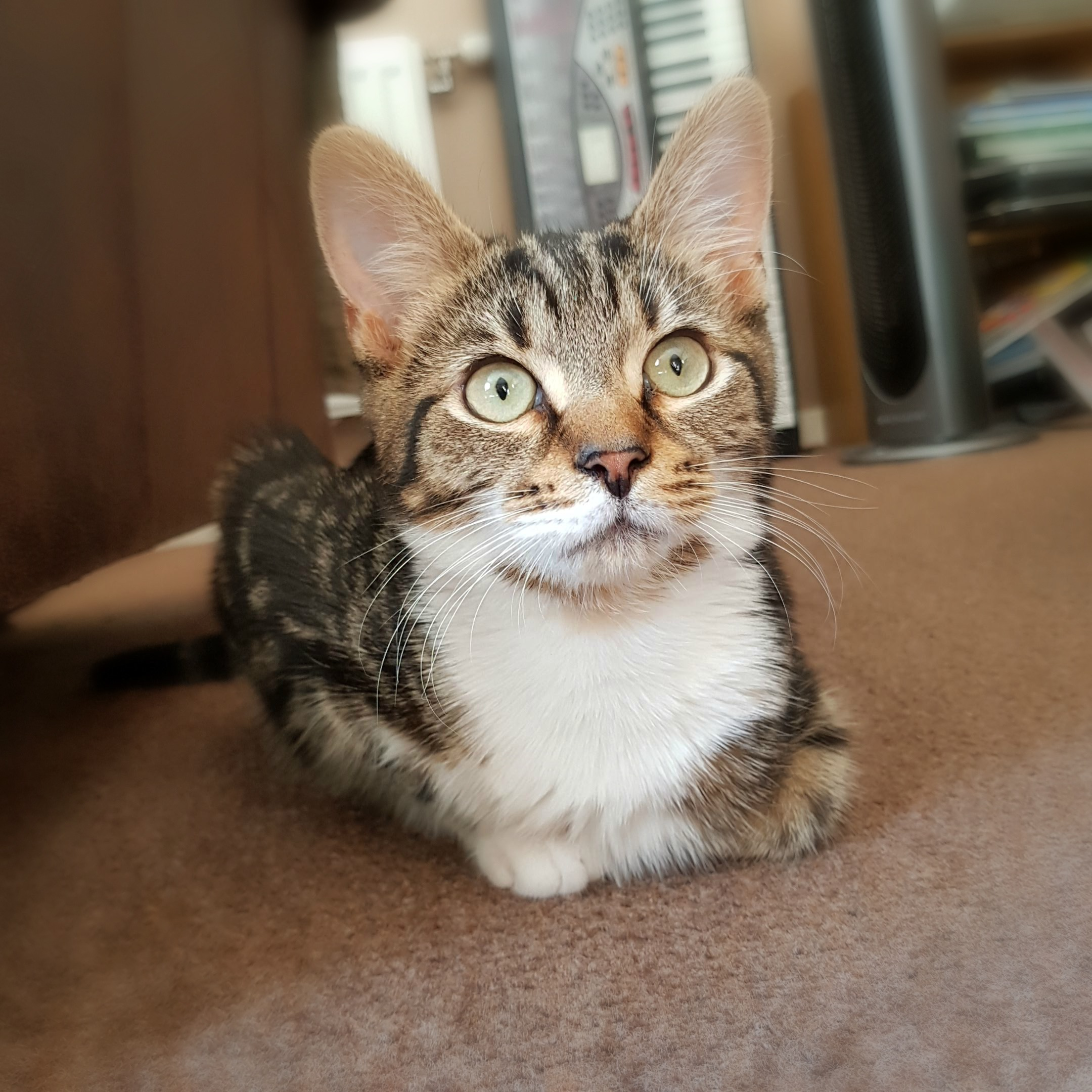 Ash the kitten